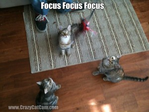 Kittens_Focusing_On_Toy